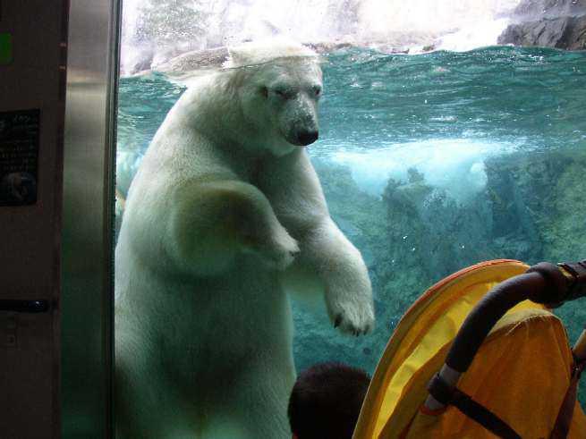 旭山動物園の関連画像1