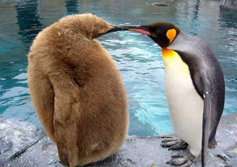 旭山動物園の関連画像2