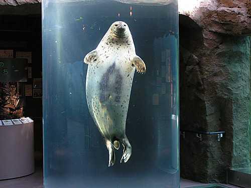 旭山動物園のメイン画像