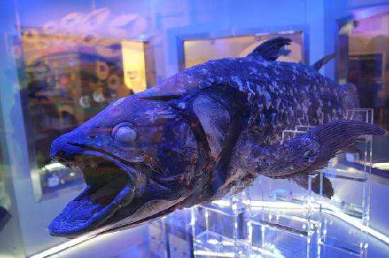 沼津港深海水族館のメイン画像